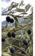 Affinade Olives Noires AOP Nyons