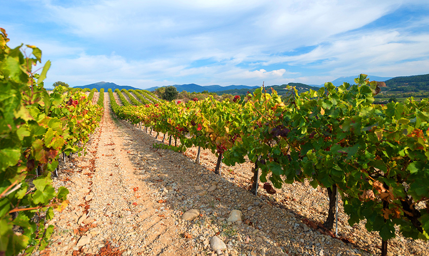 C'est l'Eté... Envie d'un Rosé ou Chardonnay d'Aloès 2018...