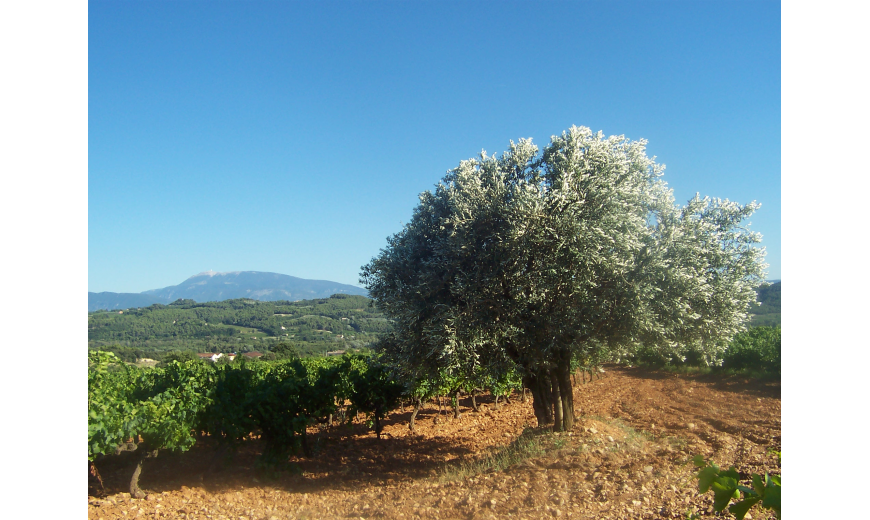 Galerie Photos Formation de la Vigne
